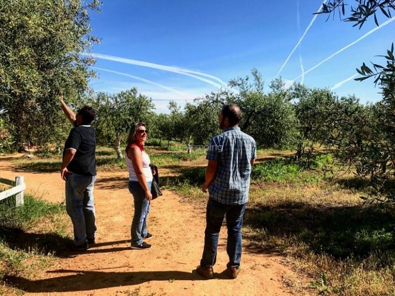 Visita al campo de olivares
