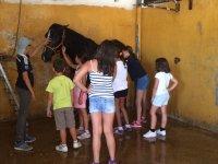 Lavando al caballo