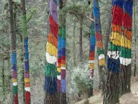 oma forest