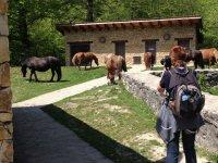 donna che fotografa cavalli
