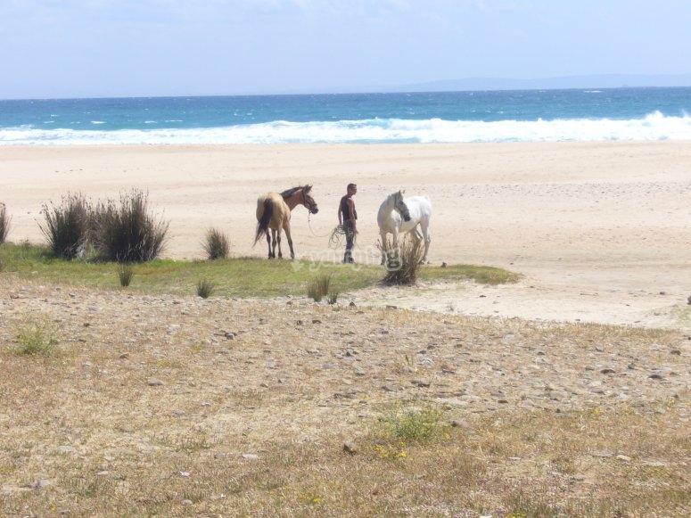 Los caballos  por la mañana