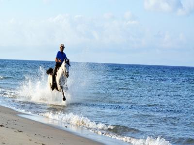 在博洛尼亚海滩的马骑术有照片的