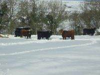 Los toros en invierno