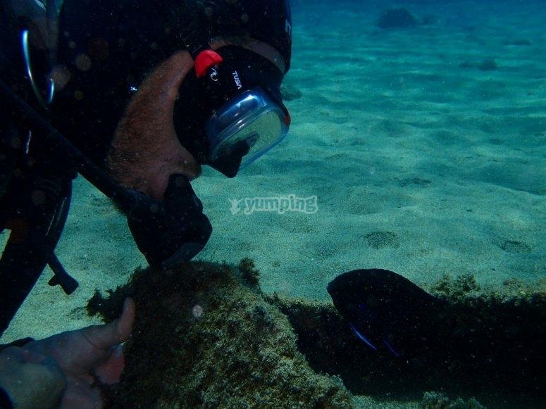 Descubre las profundidades