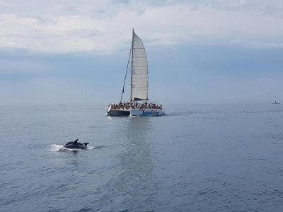 6h Renting of catamaran in Girona