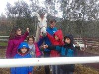 爱抚我们的马