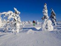 En el bosque helado con raquetas de nieve