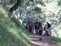 Senderistas atravesando el bosque malagueno