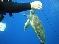 con las tortugas