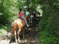 Atravesando la arboleda en caballo