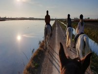 Horseback riding on the banks of the Ebro