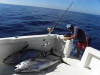 Junto a los atunes