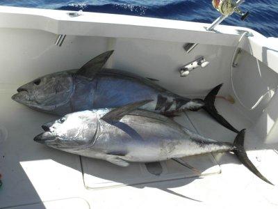 特内里费岛钓鱼之旅1天
