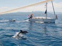 在帆船旁边的Delfin