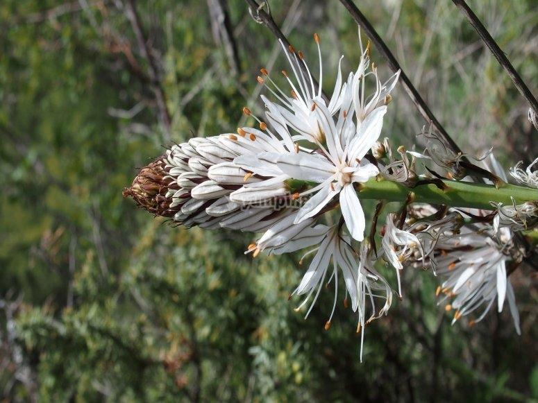 Flora autoctona