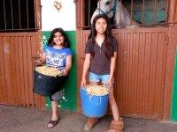 Con paja para los caballos