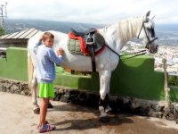 Cepillando al caballo blanco