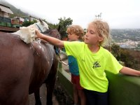 Limpiando al caballo