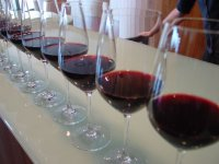 Tasting the different wines of the area