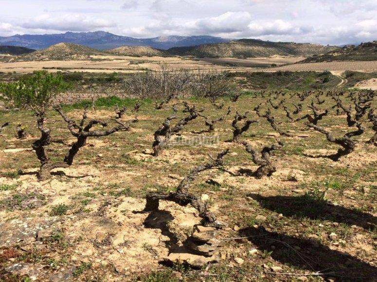 Conoce la tierra del vino