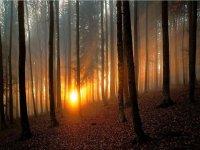 Ameneciendo en el bosque