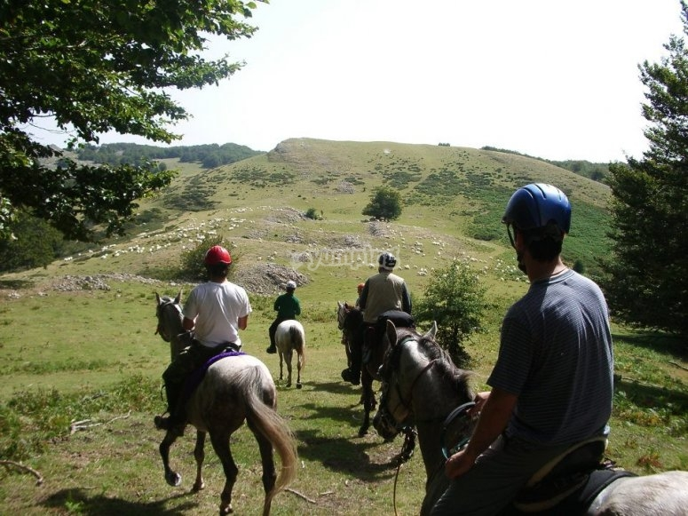 Trotting in the mountains of Guipuzcoa