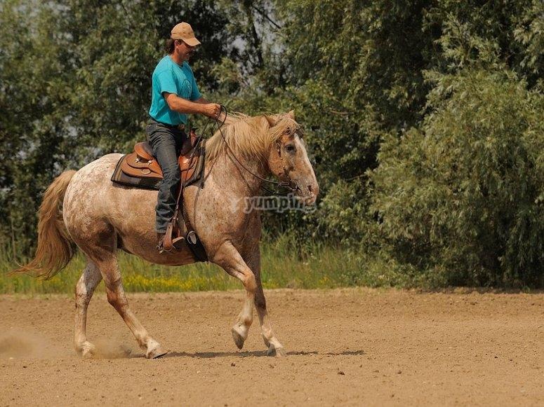 Trote a caballo