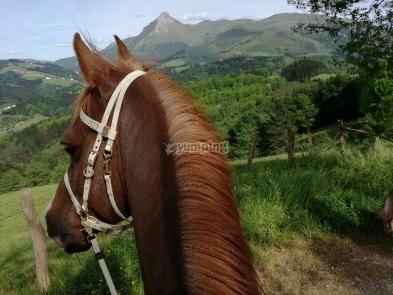 Montar a caballo en Zaldibia