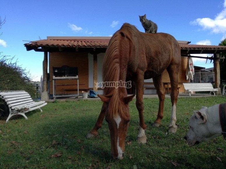 Cavallo accanto alla casa in Zaldibia