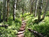 Naturaleza en mountain bike