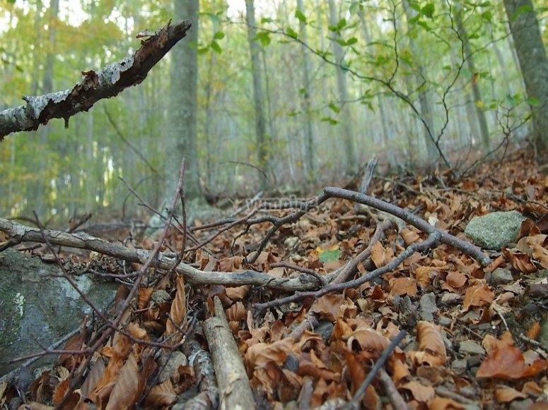 Suelo del bosque