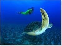 Buceando junto a la tortuga