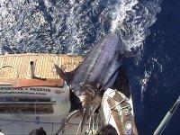 将渔获物上载到船上