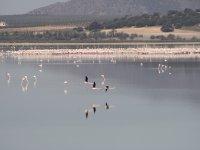 Aves en la laguna Fuente de Piedra