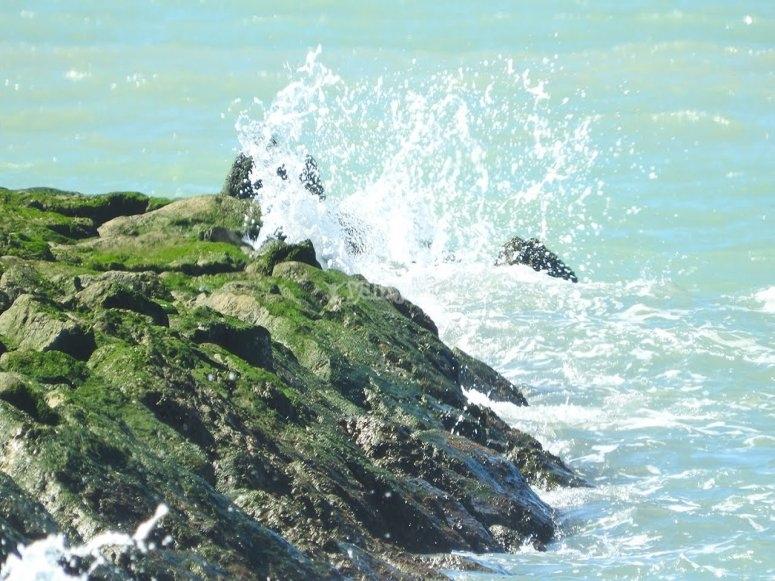 Rocas y marea en cadiz