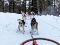 Pulled by huskies