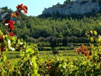 Paseo por viñedos en Cerler