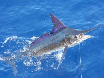 Excursión privada de pesca en Tarifa, 8 horas