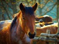 在马略卡岛海岸骑马