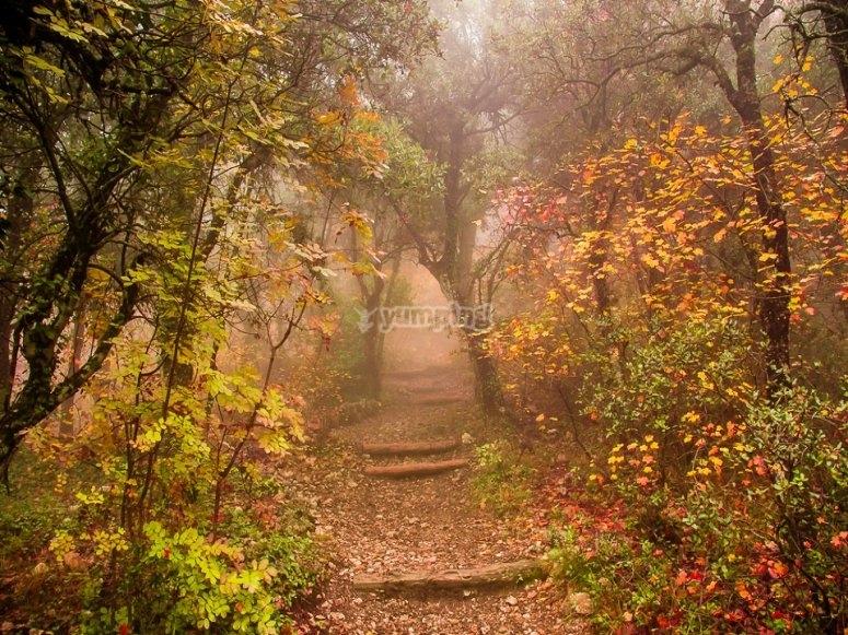 Bosque frondoso