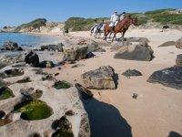 Visitar playas de Tarifa a Caballo 90min tem. baja