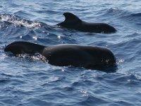鲸鱼戳--999- delfin