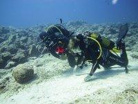 Inmersión de buceo en Fuerteventura