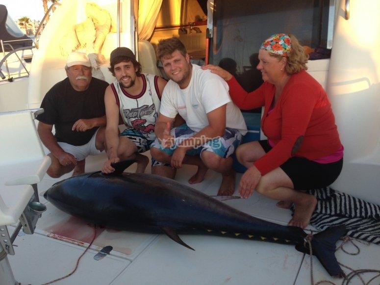 巨型红金枪鱼