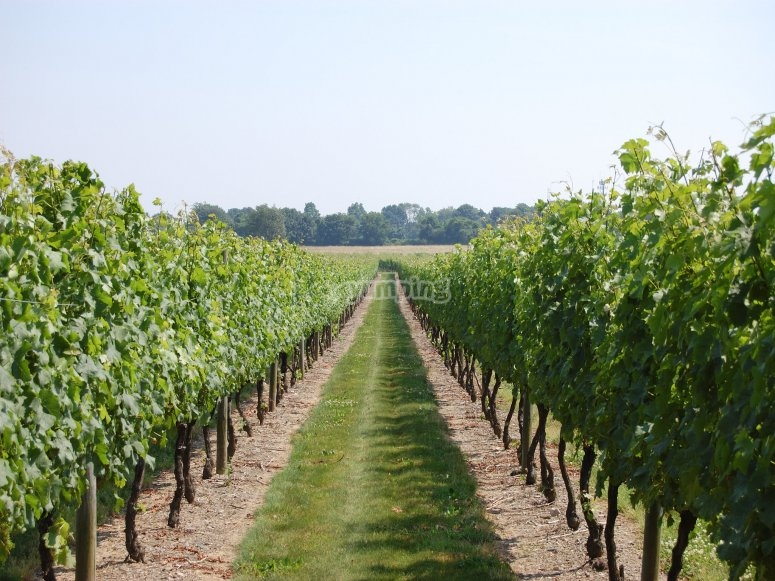 拉里奥哈(La Rioja)的葡萄酒旅游