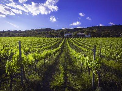 Festa del raccolto a La Rioja