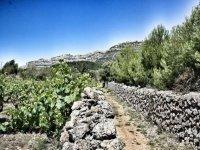 wine tourism route of Tarragona