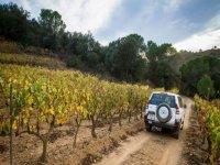 off-road between the vineyards