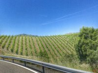 view of a vineyard from the road