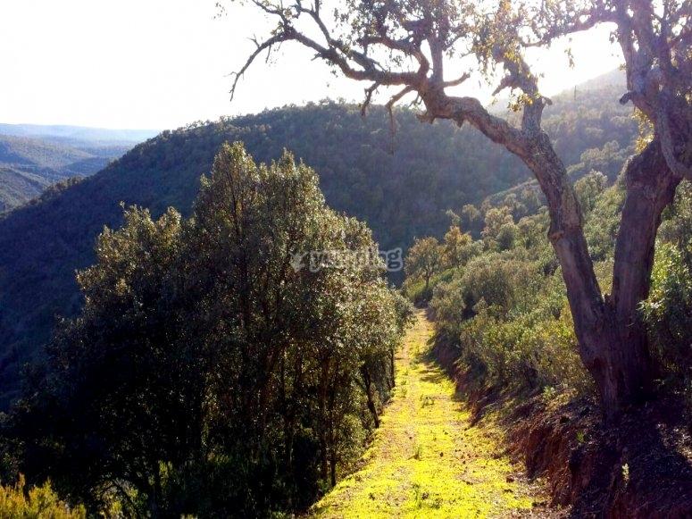 Cabaneros风景